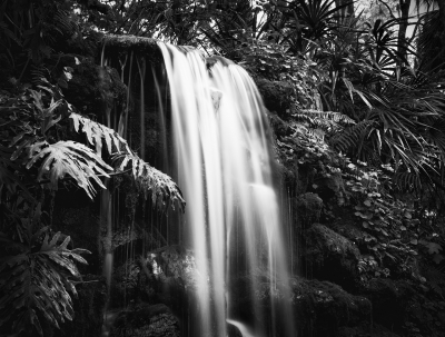 Rainbow Springs Waterfall #5
