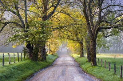 Cades Cove Great Smoky Mountains National Park Sparks Lane