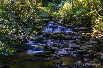 Road Prong – Great Smoky Mountains National Park