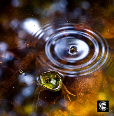 Fall In The Pond