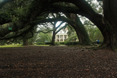 Oak Alley Plantation (0247)