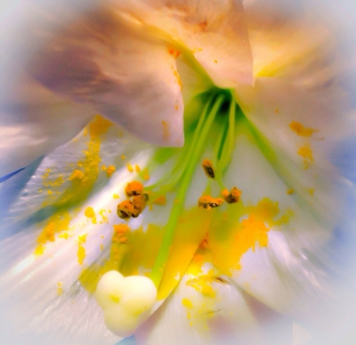 Abstract Spring Beauty