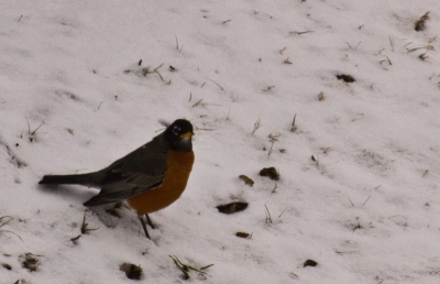 Early Bird Gets The Snow.