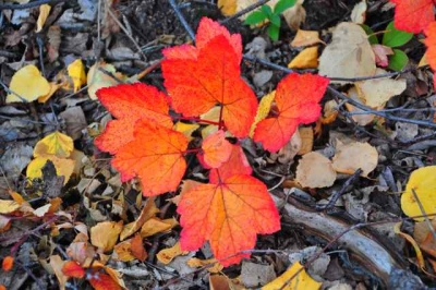 Fall Color On The Forest Floor