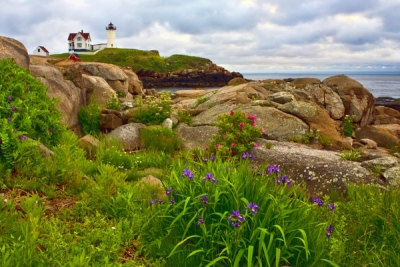 Nubble With Iris And Sea Roses