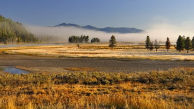 Morning Mist – Hayden Valley