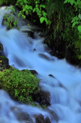 Small Creek At Columbia River Gorge