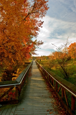 Fall On A Board Walk