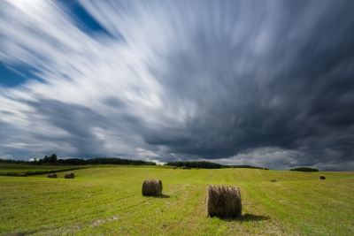 Masurian Field