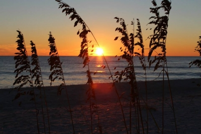 Sunset Sea Oats