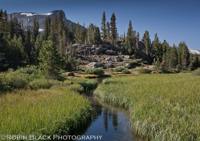 Stream And Meadow, Yosemite High Country