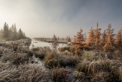Frosted Tamarack Swamp