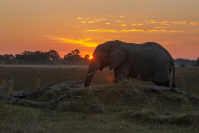 Sunset Elephant