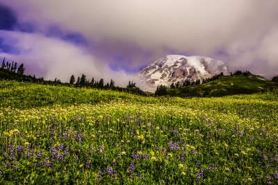 Wildflowers & Clouds At Mt. Rainier