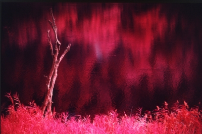 Infrared Reflections