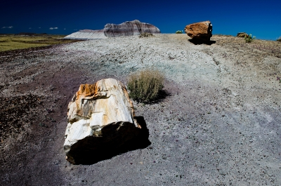 Up The Hill At Petrified Forest Np