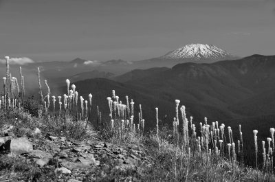 Mt. St. Helens From Silver Star Mountain