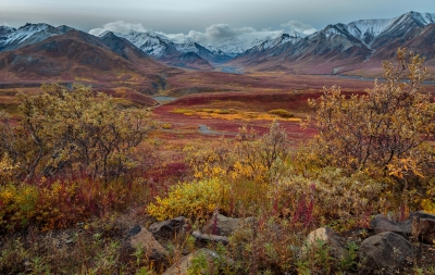 Autumn Vista From Eielson Visitor Center