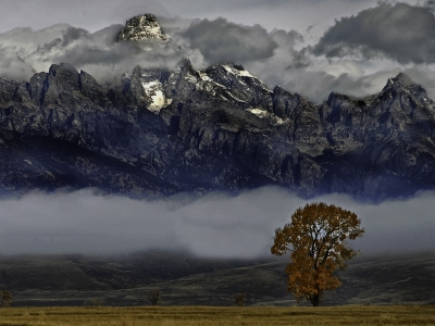 Tree At The Grand Teton