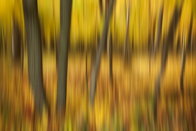Golden Forest Motion Blur