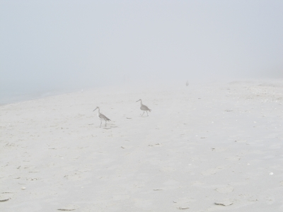 Birds At A Foggy Beach
