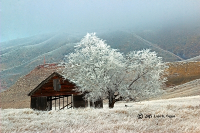 Foggy And Frosty
