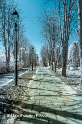 Ir Photo Of Iasi Botanical Garden