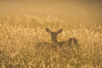 The Deer And The Sunrise