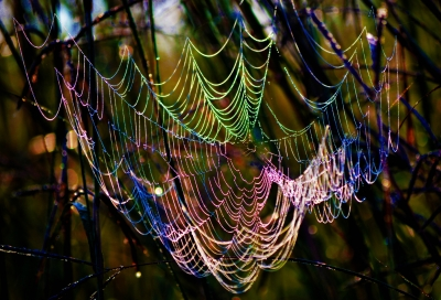 Web Of Many Colors