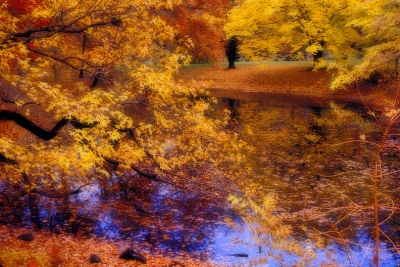 Fall Foliage By Lake