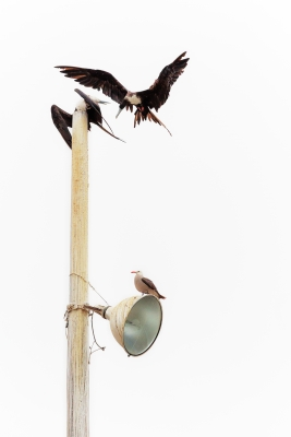 Birds On Pole