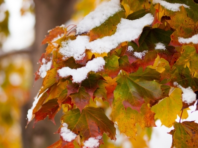 First Snow On Fall Colors