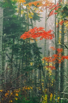 Fall Color In The Mist