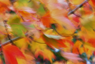 Fall Colors In The Wind