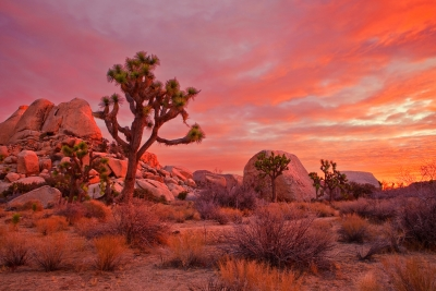 California, Joshua Tree National Park, Dawn, Rocks