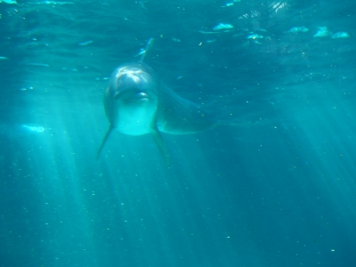 The Beauty Of  A Dolphin