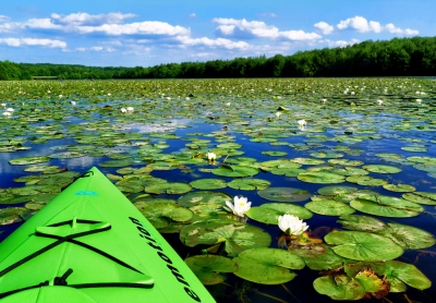 Kayaking Amond The Lily Pads