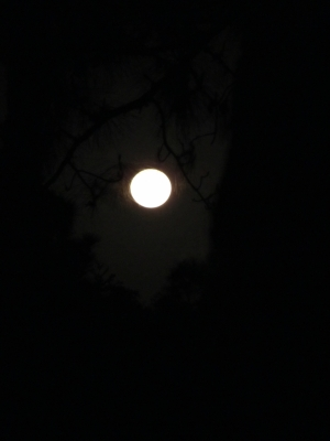 Full Moon Through Trees3