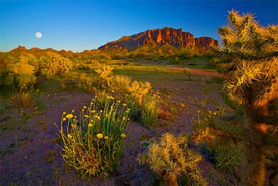 Arizona, Superstiton Wilderness, Lost Dutchman State Park,sunset, Wildflowers