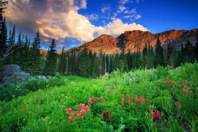 Indian Paintbrush And Mountain Light