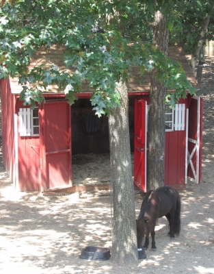 Horse And Barn.