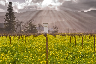 Heavenly Light On Napa Valley