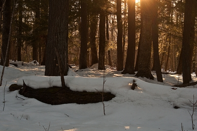 Winter Afternoon In The Big Woods