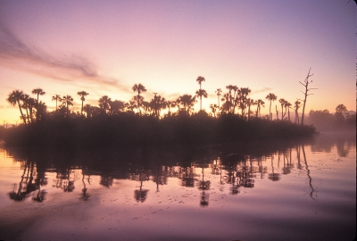 Loxahatchee River #9