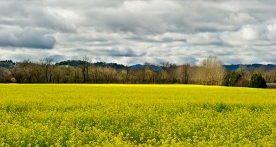 Wine Country Mustard