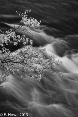 Spring Oak And River