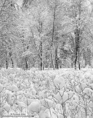 Winter Cacophony