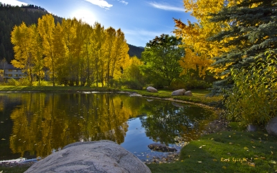 Holland Pond Aspen