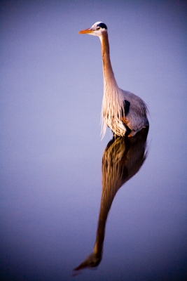 Heron Relections