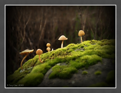Mushrooms On A Rock